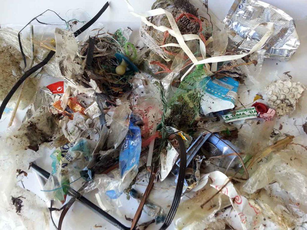Foto von der Menge aufgelesenen Plastikmüll auf 1qm Havel-UFER