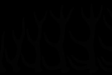 Kronhjortshornets_utveckling,_Nordisk_familjebok